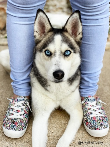 Skechers has donated more than $5.45 million to animal welfare — funds that have helped save and support more than one million shelter dogs and cats since 2016. Shown, @kikythehusky and BOBS Beach Bingo — Rovers Rally. (Photo: Business Wire)
