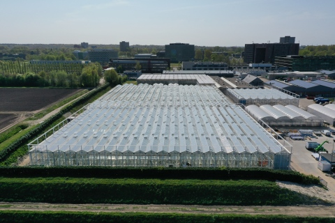 Construction of the Serre Red research greenhouse nears completion at Wageningen campus (April 2020, photo courtesy of Unifarm – Wageningen University & Research)