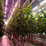 Fluence Expands PhysioSpec™ Spectra Offering on VYPR Series for Global Greenhouse Cultivators