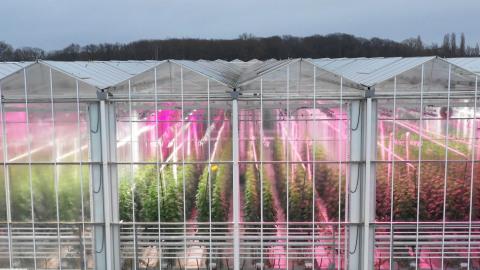 Gli spettri ulteriormente ampliati PhysioSpec™ di Fluence permettono ai produttori di ottimizzare le strategie di illuminazione per qualsiasi coltura, in qualsiasi stadio di coltivazione o collocazione geografica. (Foto per gentile concessione di Fluence by OSRAM)