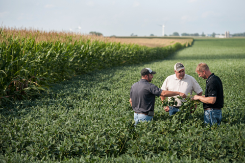 Grower and sales reps in soybean field next to corn field. (Photo: Business Wire)