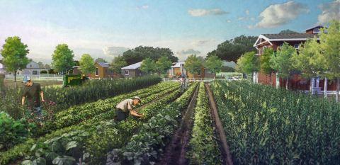 Organic farming at Village Farm Tiny Home Community (Photo: Business Wire)