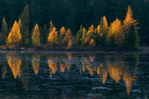 """Tamarak Reflections"" (Photo by Sparky Stensaas)"