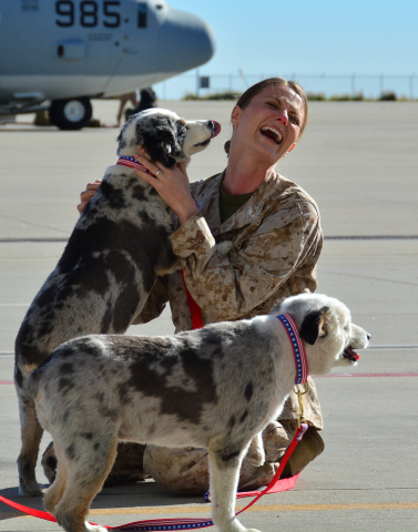 Dogs on Deployment Founder Alisa Johnson reunites with her pups on the flight line after being deployed in 2015. The C-130 aircraft pictured in the background is what Johnson flew while in the Marines. (Photo: Business Wire)