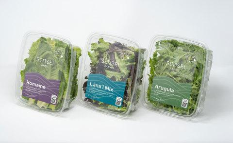 Sensei Farms' delicious, nutritious leafy greens (Photo: Sensei Ag)