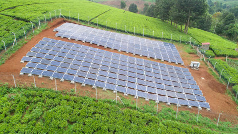 REDAVIA Solarpark bei Menengai Tea Farm (Photo: Business Wire)
