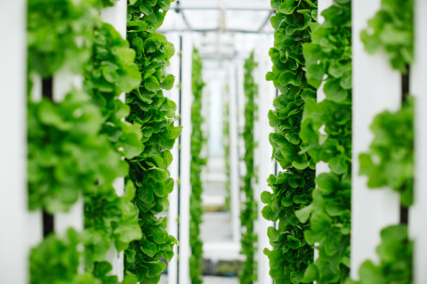 A new vertical farming venture from Bayer and Temasek will focus on innovation in vegetable varieties with the goal of lifting the vertical farming space to the next level of quality, efficiency and sustainability. (Photo: Business Wire)