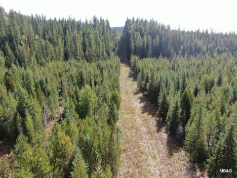 The Molpus Woodlands Group has permanently conserved 95 acres of forest in north Idaho, located near Hall Mountain in the Kootenai Valley. (Photo: Business Wire)