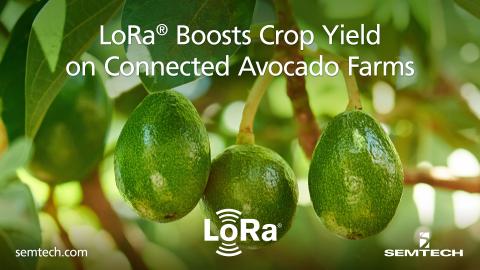 Definium deploys Semtech's LoRa devices in avocado farms. (Graphic: Business Wire)