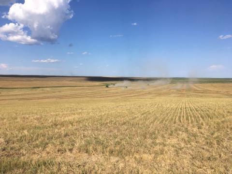 Gunsmoke Farms organic wheat harvest, 2020. (Photo: Business Wire)