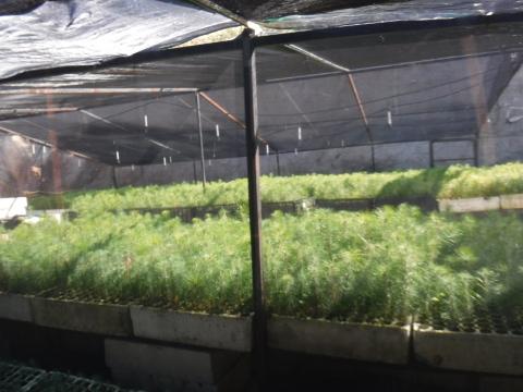 Con la mejora del vivero habrá mayor oferta de plántulas para revegetar las cuencas del Parque reproduciendo especies nativas. (Photo: The Nature Conservancy Mexico)