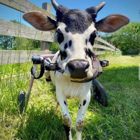 Photo from one of the eight winners, Iowa Farm Sanctuary. (Photo: Business Wire)