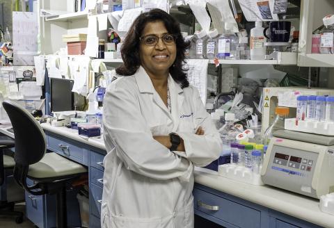 Dr. Sangeeta Chavan in her lab. (Credit: The Feinstein Institutes)