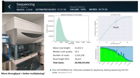 Figure 1. Results from a long-read DNA sequencing of an E. Coli bacterial sample on a single ONT MinION flow cell following NAIP with Fire Monkey/Fire Flower v8 protocol. Copyright RevoluGen. (Graphic: Business Wire)