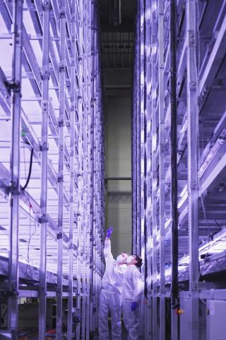 YesHealth Group und Nordic Harvest bringen ersten Bauabschnitt der größten vertikalen Farm Europas zum Abschluss. Die neue vertikale Farm umfasst 14 Etagen und steht auf einem 7000 qm großen Grundstück des Kopenhagener Marktes außerhalb der dänischen Hauptstadt. (Foto: Business Wire)