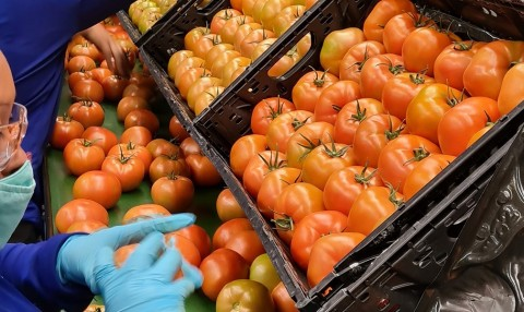 Delicious, fresh tomatoes meet IFCO supply chain efficiency in North America (Photo: Business Wire)