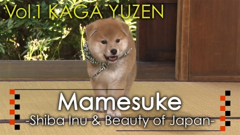 Mamesuke -Shiba Inu & Beauty of Japan- / Vol. 1 KAGA YUZEN (Graphic: Business Wire)