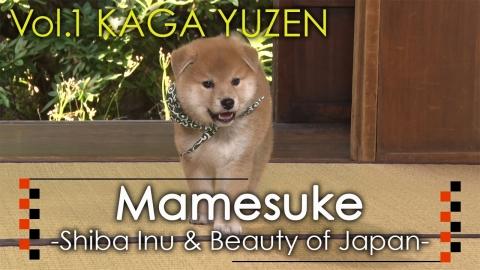 Mamesuke -Shiba Inu & Beauty of Japan- / Vol. 1 KAGA YUZEN (Graphic: Business Wire)