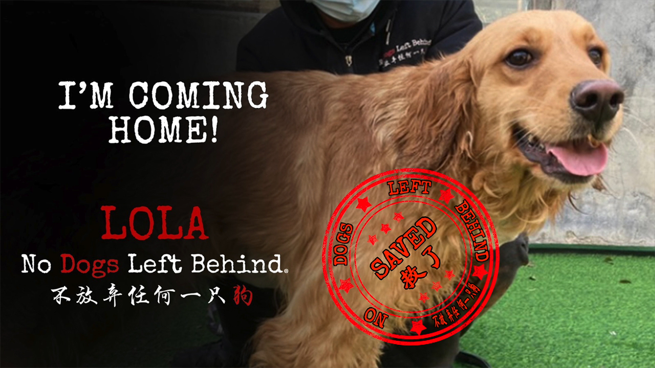 No Dogs Left Behind welcomes home survivors.  Images included in this video may be disturbing to some of our audience.  Please use your discretion.