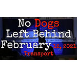 No Dogs Left Behind Meat Market Survivors Coming Home