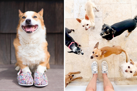 Through its partnership with Petco Foundation and animal welfare organizations, Skechers has donated more than $6.2 million to help to save and support over a million shelter dogs and cats in the United States and Canada, like Eggnog, adopted from Our Best Friends Rescue in Rockaway, NJ, and the rescues at Two Chihuahuas foster-based rescue in Scottsdale, AZ. Photo credits: @thestumpybrigade (left) and @twochihuahuas (right)