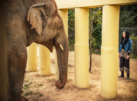 "Cher meeting with Kaavan, ""world's loneliest elephant"" in Pakistan. (Photo: Smithsonian Channel)"