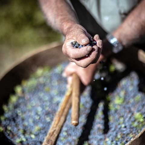 Juniper berries from Tuscany, Italy (Photo: Business Wire)