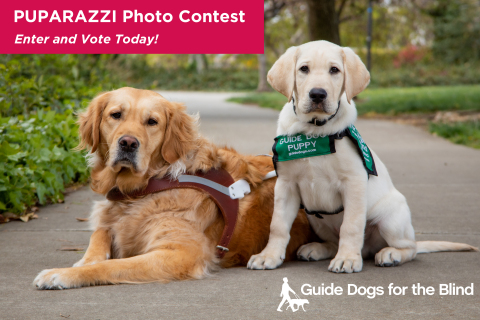 Guide Dogs for the Blind brings cuteness into focus with photos of adorable dogs shared online through its annual Puparazzi Photo Contest. (Photo: Business Wire)