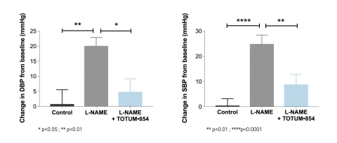 Figure 1: Effect of TOTUM•854 supplementation on systolic (SBP) and diastolic (DBP) blood pressure after 3 weeks, in an induced hypertension model (L-NAME model). After 3 weeks, L-NAME induced a 24 mmHg-raise in SBP and a 19 mmHg- raise in DPB (grey bars). Supplementation with TOTUM•854 (blue bars) significantly reduced SBP by 16 mmHg (p<0.01) and DBP by 15 mmHg (p<0.05). (Graphic: Business Wire)