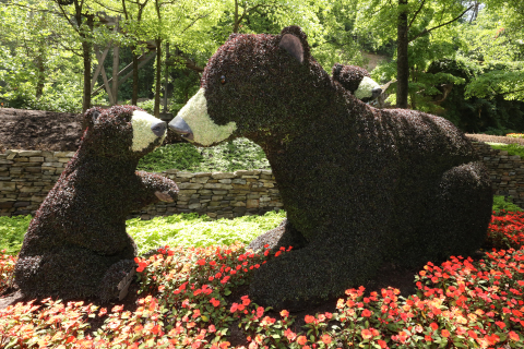Larger-than-life floral creations are found throughout Dollywood's Flower & Food Festival presented by Covenant Health. The cuddly bears are just one of the breathtaking displays guests can enjoy. (Photo: Business Wire)