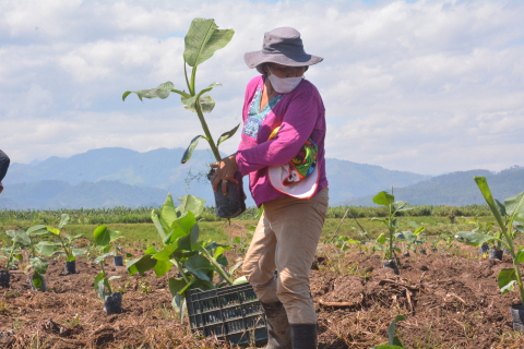 Replanting bananas in Honduras. Restoring fields and livelihoods destroyed by Hurricanes Eta and Iota in November 2020. (Photo: Business Wire)