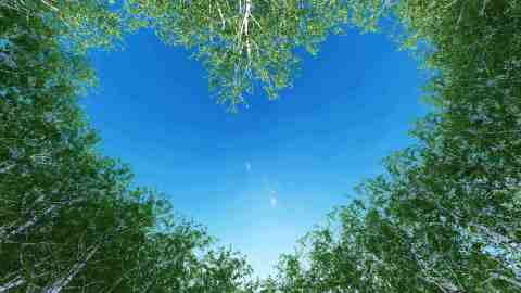 """The """"One Heart Forest"""" will be created in loving memory of the millions of lives our world has lost to the Covid-19 pandemic (Photo: Business Wire)"""