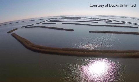 With support from Yamaha Rightwaters, Ducks Unlimited will restore designated seagrass and wetland habitats and contribute to climate mitigation through a combination of protecting buried carbon and sequestering atmospheric carbon at rates up to 530 metric tons of carbon dioxide per year across two projects.  (Photo: Business Wire)