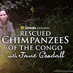 CuriosityStream Celebrates World Chimpanzee Day with July ...
