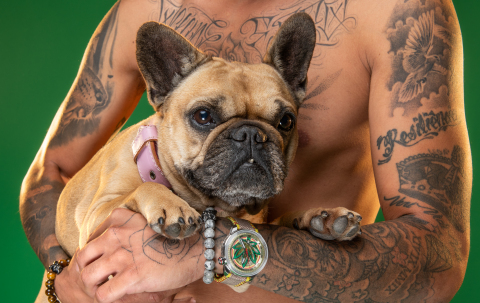 Los vínculos de BOMBERG con el CBD provienen de una relación cultivada durante años con los perros.  Desde el lanzamiento de BOMBERG en 2012, los bulldogs Bolt, en México, y Duke y Paulina, en Suiza, han sido nuestros embajadores oficiales.  (Photo: Business Wire)