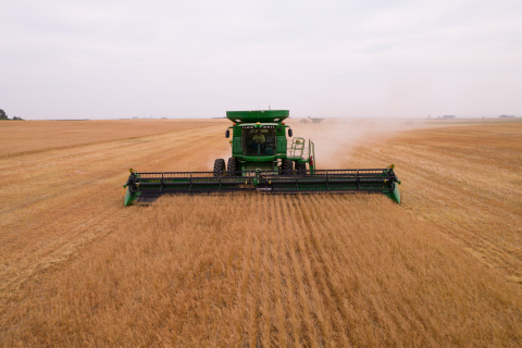 GCEH 2021 Montana Camelina harvesting (Photo: Business Wire)