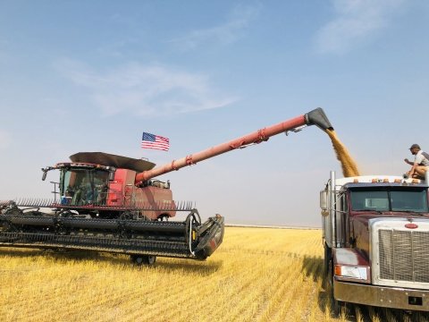 GCEH 2021 Montana grain transfer to truck (Photo: Business Wire)