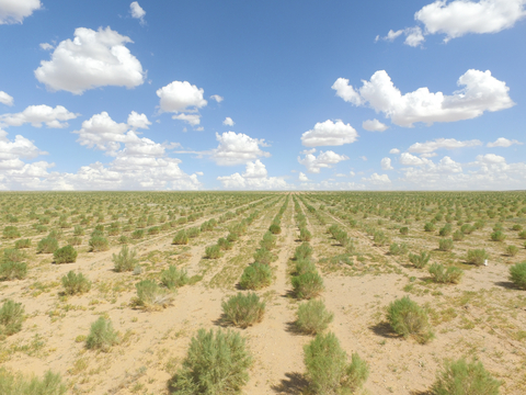 Saxaul trees Ant Forest users helped plant in Alxa, Inner Mongolia (Photo: Business Wire)