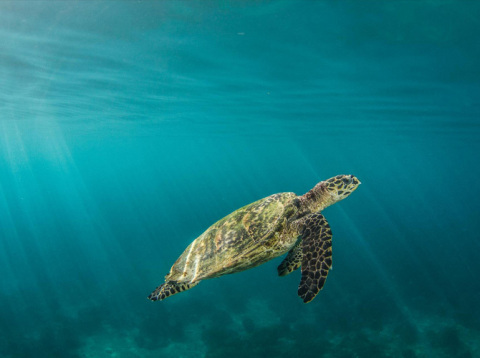 Mary Kay has partnered with The Nature Conservancy to protect the critically endangered species of hawksbill sea turtles through the fostering of female-led ecotourism in the Solomon Islands. © Christophe Mason-Parker