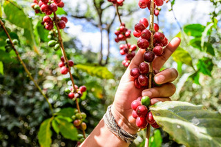 Westrock Coffee Company commits that 100% of its coffee and tea will be responsibly sourced by 2025. (Photo: Business Wire)