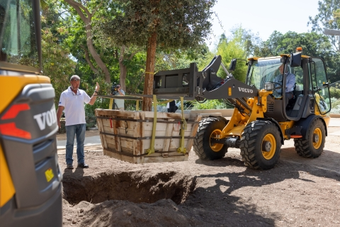 The Volvo L25 Electric compact wheel loader uses a fork attachment to plant a 16-foot-tall, 3,500-pound cork oak tree in the UCLA Mildred E. Mathias Botanical Garden during a press event Tuesday.  (Photo: Business Wire)
