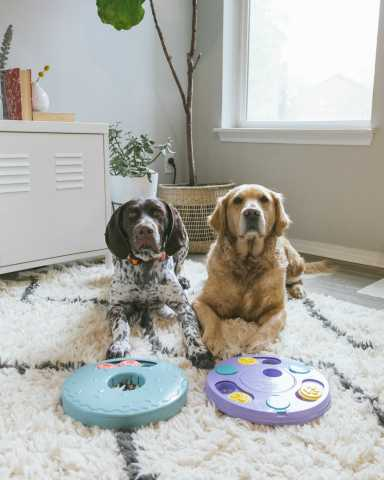 Through it's partnership as the first official dog toy sponsor of the LA Kings, ZippyPaws and the LA Kings will leverage its dynamic new relationship to raise awareness for pet-focused charitable organizations and community outreach initiatives across Southern California. (Photo: Business Wire)