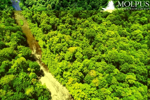 Molpus Woodlands Group has registered or sold more than one million acres of carbon offset projects, which are estimated to generate over 7 million metric tons of carbon offsets. (Photo: Business Wire)