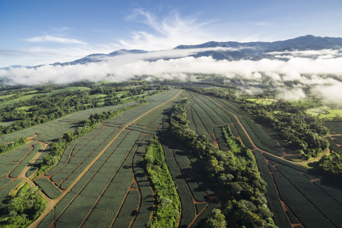 Fresh Del Monte Further Commits to Sustainable Agriculture Practices, Speaking at World Biodiversity Summit (Photo: Business Wire)
